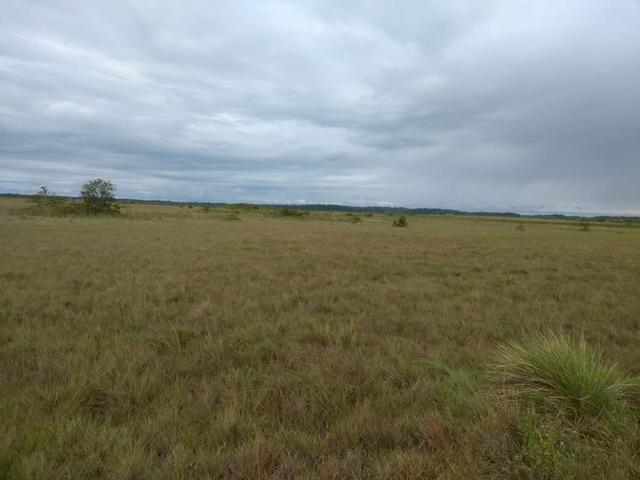 Terras Para soja em Roraima