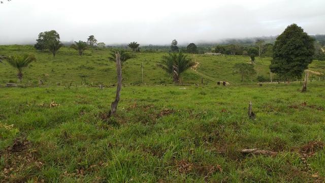 Fazenda - Foto 19