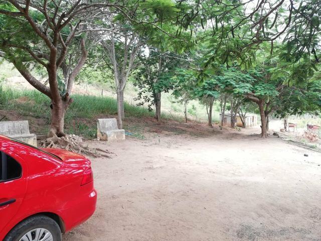 Oportunidade Fazenda de 175 hec por 430 mil - Foto 4