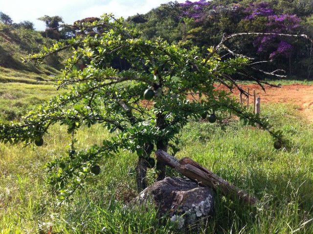 Vende-se Fazenda em Rio Espera-MG - Foto 6