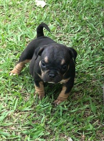 Cachorro  - Foto 4