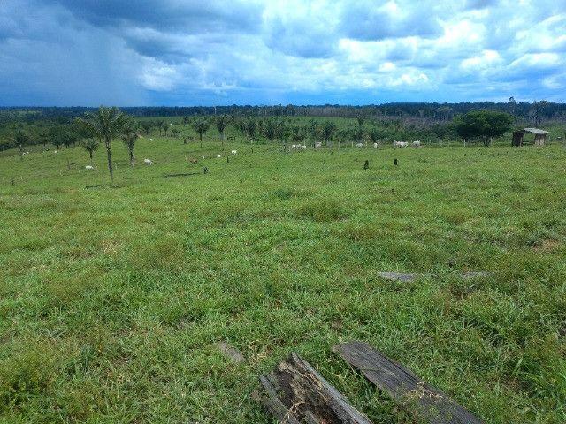 Fazenda (Porteira fechada) no Apuí-AM - Foto 12