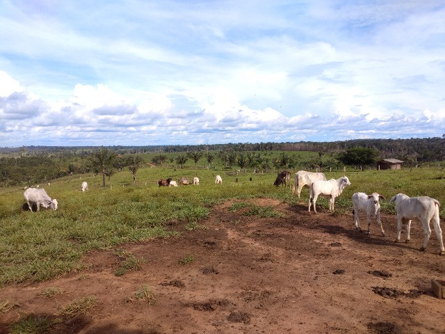Fazenda (Porteira fechada) no Apuí-AM - Foto 11