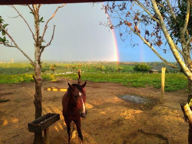 Fazenda (Porteira fechada) no Apuí-AM - Foto 6