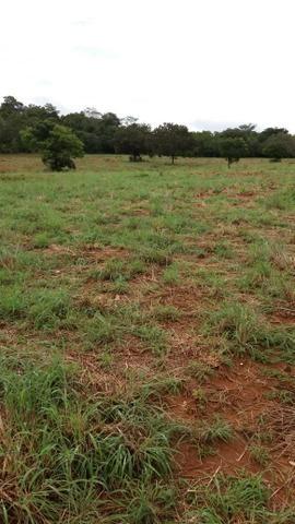 Muito barata 2.652 hectares - Foto 5