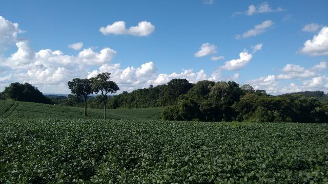 Fazenda vendo Santa Maria do Oeste - PR - Foto 6