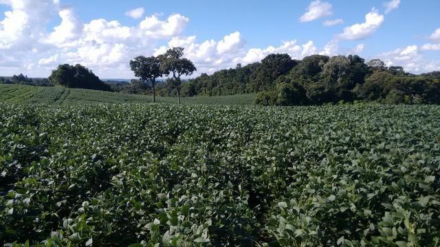 Fazenda vendo Santa Maria do Oeste - PR