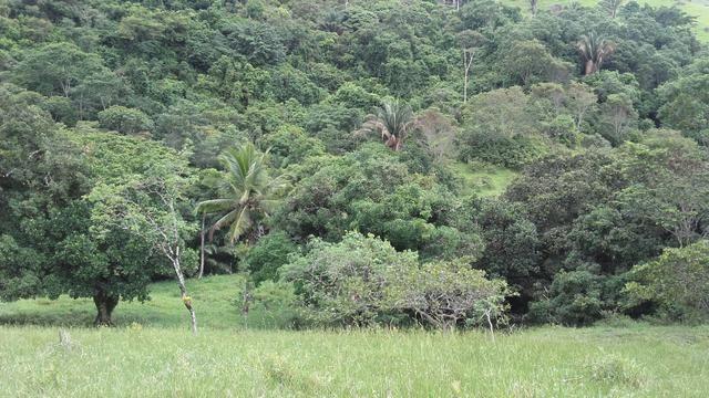 Linda Fazenda em Joaquim Gomes 60 hectares apenas 750 mil - Foto 12