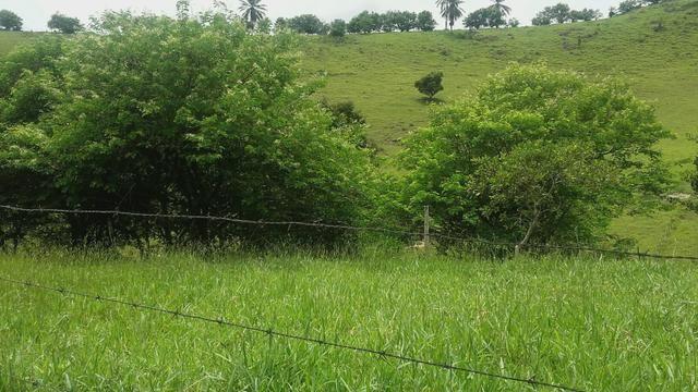 Linda Fazenda em Joaquim Gomes 60 hectares apenas 750 mil - Foto 19