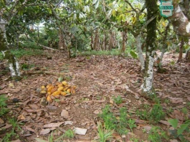 Fazenda de 278 hectares, entre Ubaitaba e Travessão - Foto 18