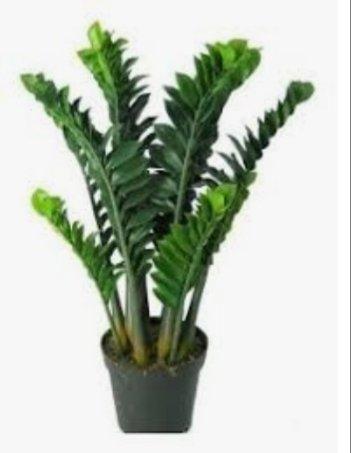 Vários modelos de plantas - Foto 2