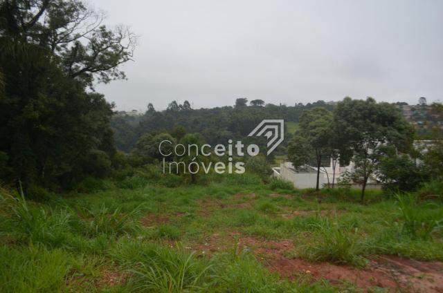 Terreno à venda em Estrela, Ponta grossa cod:391713.001 - Foto 11