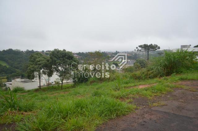 Terreno à venda em Estrela, Ponta grossa cod:391713.001 - Foto 9