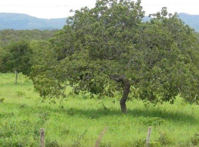 Compra de terra; sítios, chácara e fazenda. - Foto 6