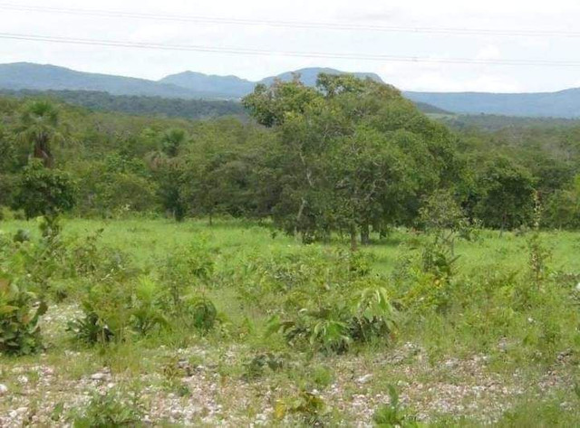 Compra de terra; sítios, chácara e fazenda. - Foto 8