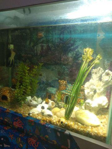 Vendo um lindo aquário completo  - Foto 2
