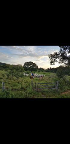 Fazenda br 153 - Foto 2