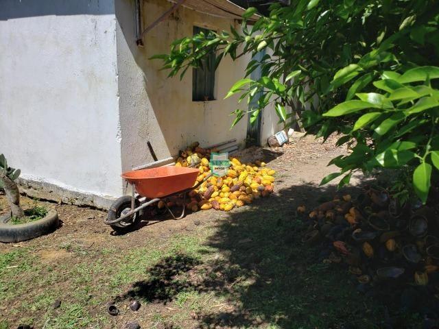 Ibirapitanga. Fazenda pequena com área de 12 ha - Foto 5