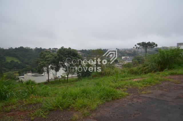 Terreno à venda em Estrela, Ponta grossa cod:391713.001 - Foto 7