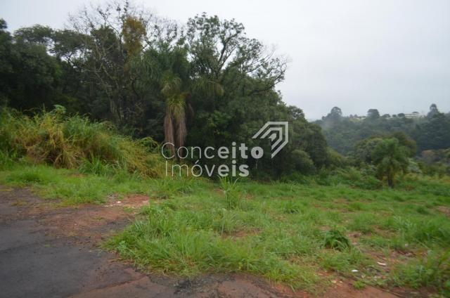 Terreno à venda em Estrela, Ponta grossa cod:391713.001 - Foto 3