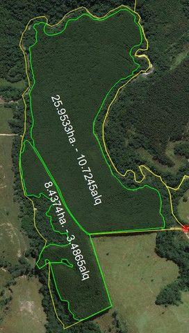 Área com eucalipto - 34,3907ha plantado (14 alqueires)- Itararé/SP