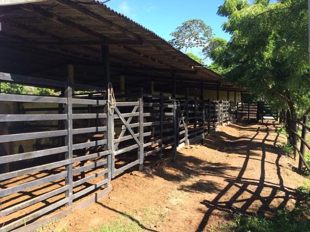 Cavalos aluguel de baias e doma racional - Foto 5