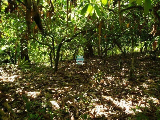 Ibirapitanga. Fazenda pequena com área de 12 ha - Foto 16