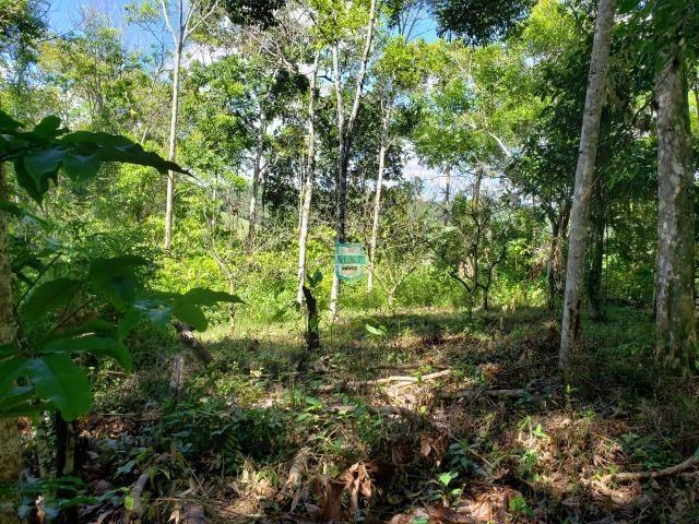 Ibirapitanga. Fazenda pequena com área de 12 ha - Foto 19