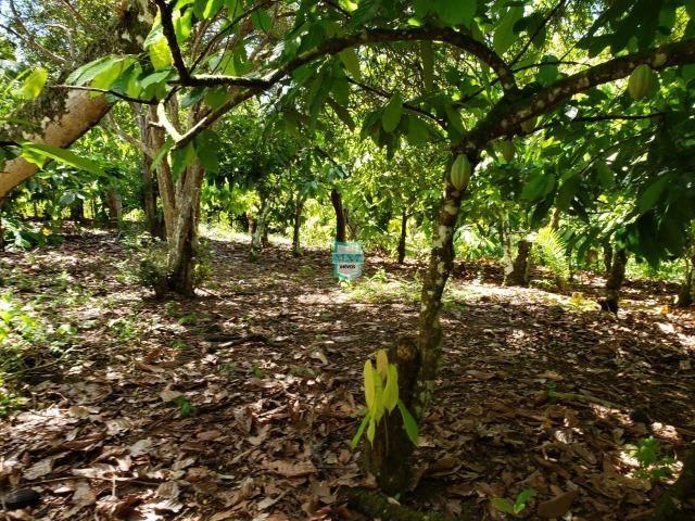 Ibirapitanga. Fazenda pequena com área de 12 ha - Foto 17