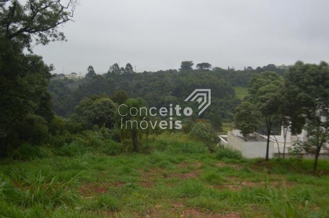 Terreno à venda em Estrela, Ponta grossa cod:391713.001 - Foto 10