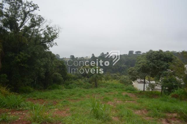 Terreno à venda em Estrela, Ponta grossa cod:391713.001 - Foto 12