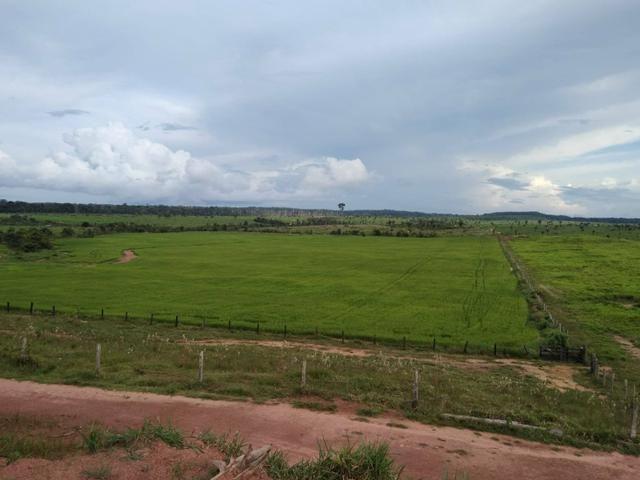 Vendo Fazenda Rondônia - Foto 3
