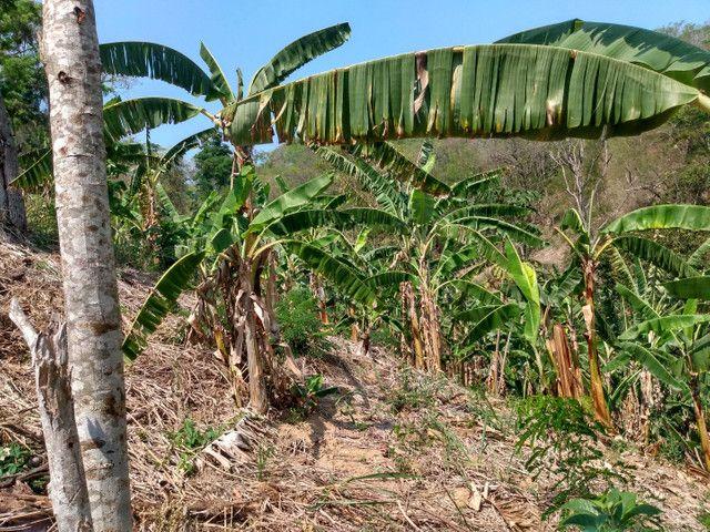 Sítio com 22.000 m2 plantação de banana e outros frutos - Foto 5