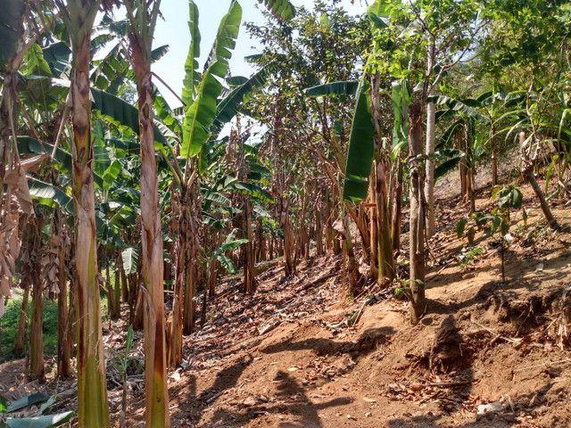 Sítio com 22.000 m2 plantação de banana e outros frutos - Foto 9