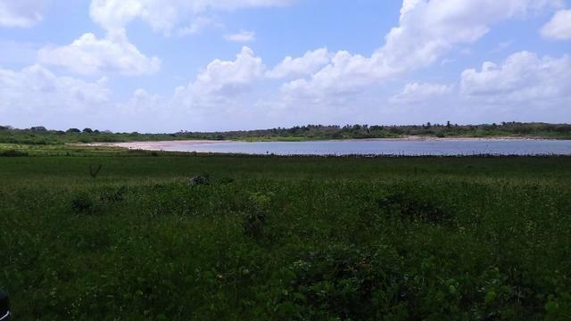 Fazenda em Itarema 386 hectares plantados de cajueiros,lagoa,poço,rio na extrema - Foto 7