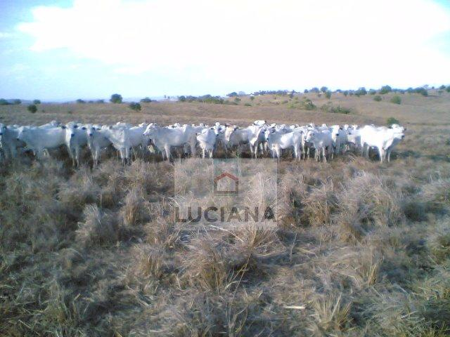 Fazenda com 467 hectares em Limoeiro (Cód.: 103m57) - Foto 4