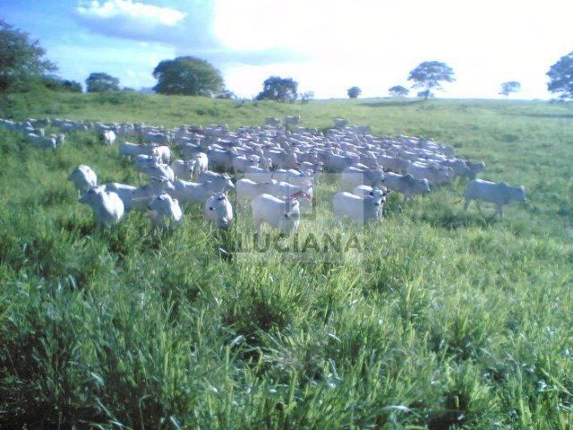 Fazenda com 467 hectares em Limoeiro (Cód.: 103m57) - Foto 7