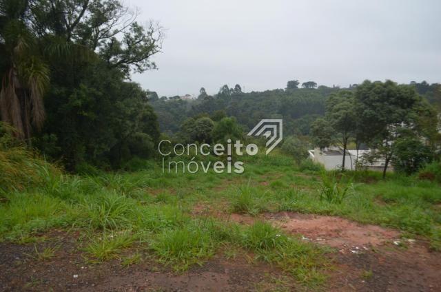 Terreno à venda em Estrela, Ponta grossa cod:391713.001 - Foto 4