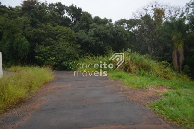 Terreno à venda em Estrela, Ponta grossa cod:391713.001 - Foto 2