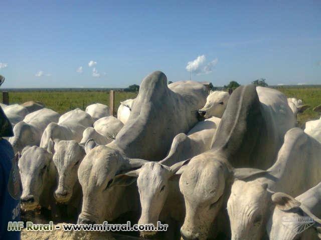 Linda Fazenda em Mato Grosso - em Conquista D´oeste - MT - Foto 2
