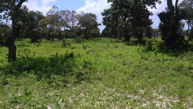 Fazenda em Itarema 386 hectares plantados de cajueiros,lagoa,poço,rio na extrema - Foto 10