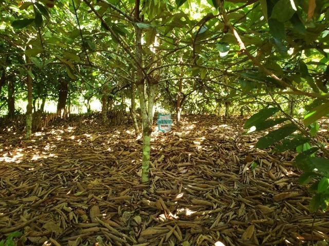 Ibirapitanga. Fazenda pequena com área de 12 ha - Foto 18