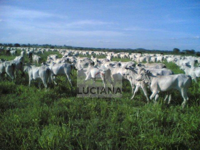 Fazenda com 467 hectares em Limoeiro (Cód.: 103m57) - Foto 8