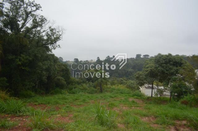 Terreno à venda em Estrela, Ponta grossa cod:391713.001 - Foto 13
