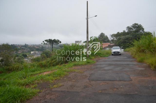 Terreno à venda em Estrela, Ponta grossa cod:391713.001 - Foto 8