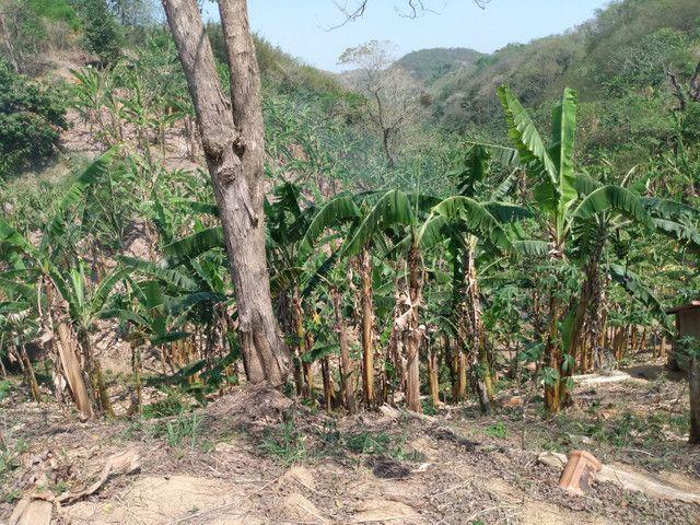 Sítio com 22.000 m2 plantação de banana e outros frutos - Foto 7
