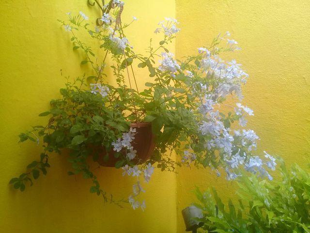 Pouso Flor de Liz / Diaria apartir de 60 reais / * - Foto 3