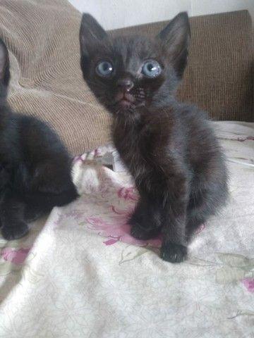 gato filhote preto - Foto 3
