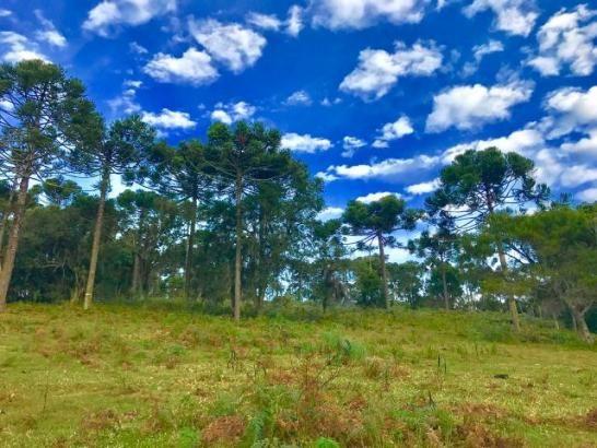 Sítio em Urubici com 25 hectares