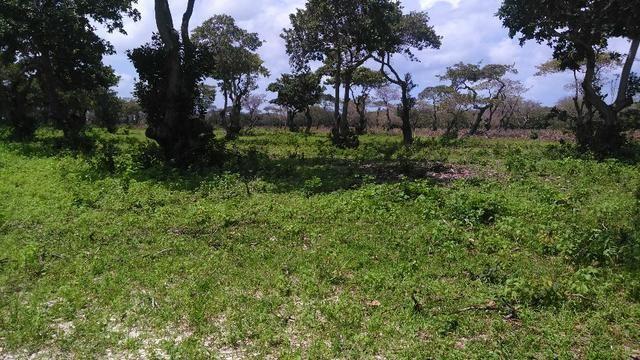 Fazenda em Itarema 386 hectares plantados de cajueiros,lagoa,poço,rio na extrema - Foto 11